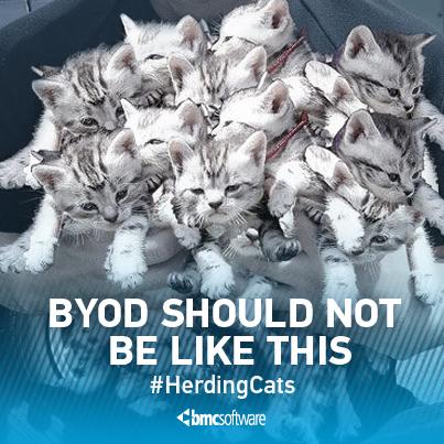 herding_cats_day_121513.jpg